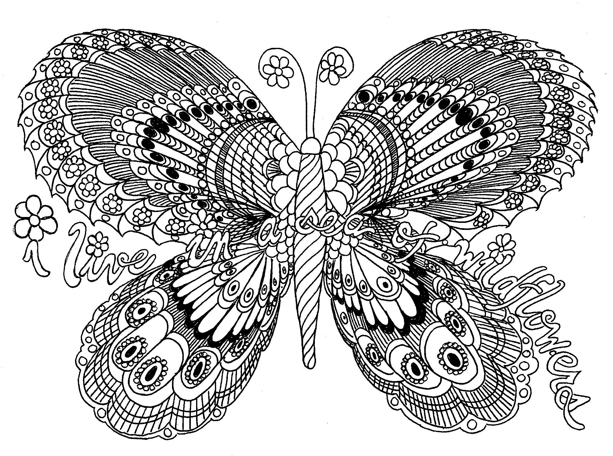 colormebutterflyscan