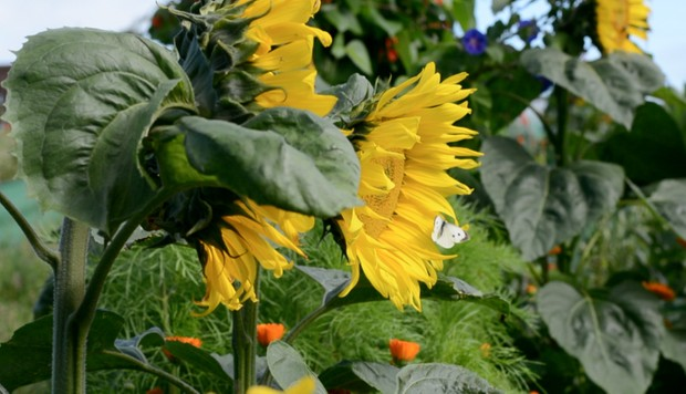 Summer Fruits/Vegetables and Flowers