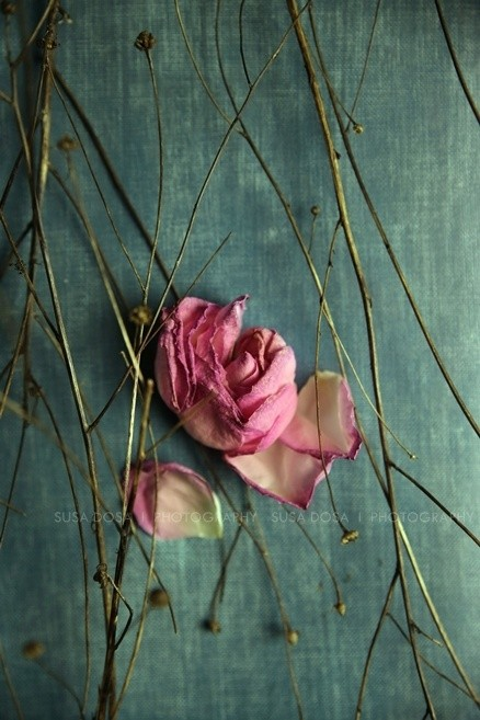 - Lonely Rose -