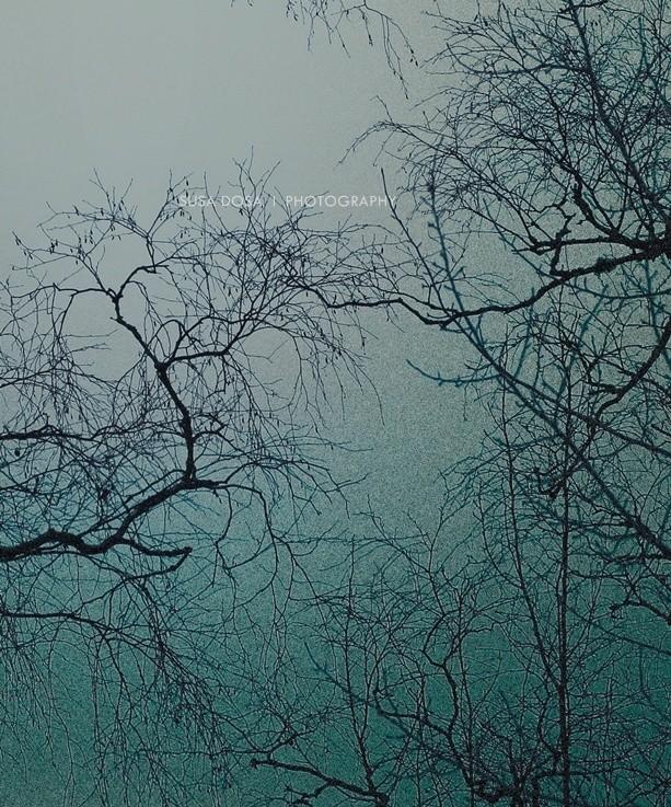 - Branch -
