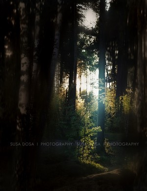 -Blue light in the Forest -