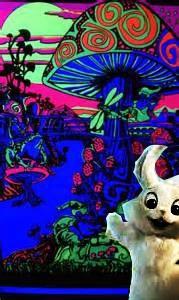 TSME120_Joe and the Giant White Rabbit