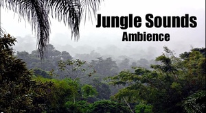 Ambience Hub - Jungle Sounds