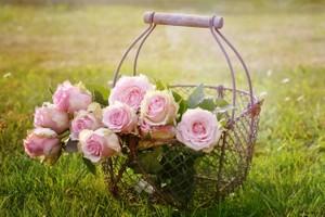 Romantic Orchestral Sentimental Piano Violin