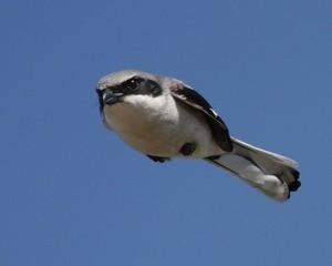 Beware the Shrike by Brett Van Donsel