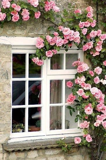 The Garden Window