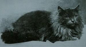 Audiolibro  : El gato negro
