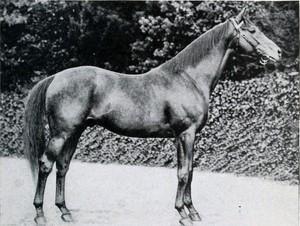 Audiollibre: História d'un cavall (Kolstomero)