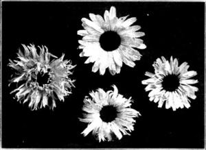 Audiolibro: Tres Muertes