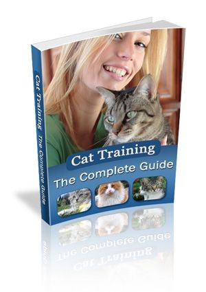 The Complete Guide To Cat Training