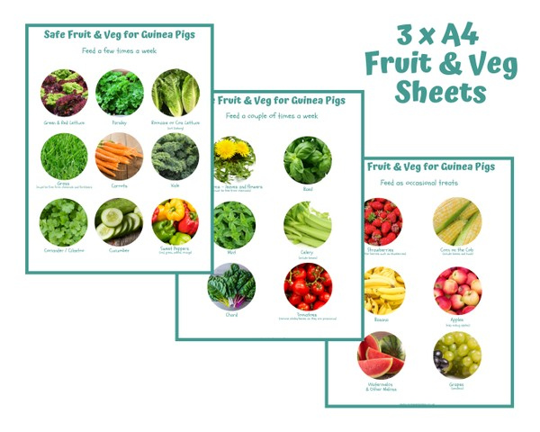 Guinea Pig Safe Fruit & Veg Chart - INSTANT DOWNLOAD
