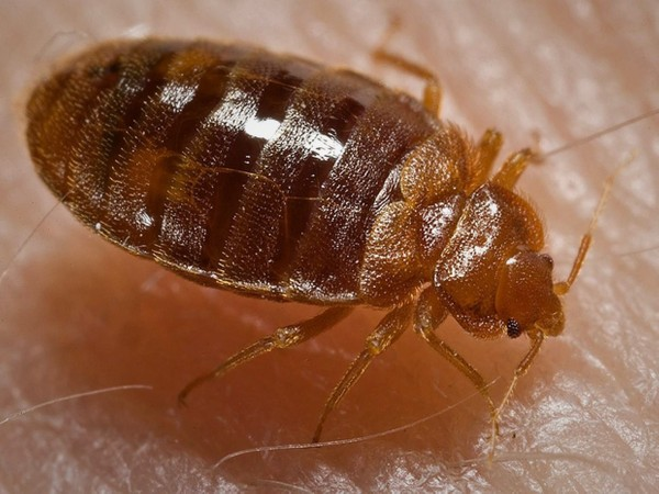 Ten Tips to Prevent or Control Bed Bugs