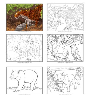 Wildlife Coloring Book Pages - Volume 1