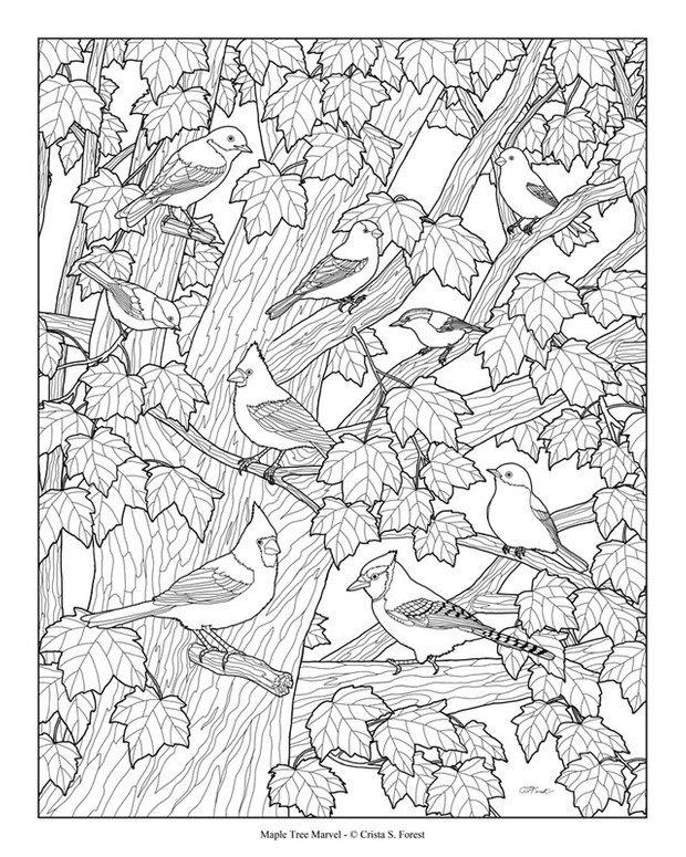 Birds in Maple Tree Adult Coloring Page