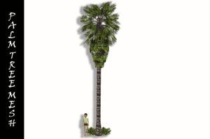 TALL PALM TREE MESH
