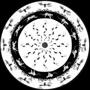 La Trilogía Andina - Fenaquistoscopio
