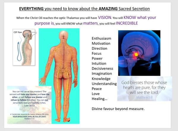 SEEK VISION - Sacred Secretion / Christ Oil Transcript. Full Biblical and physiological break down.