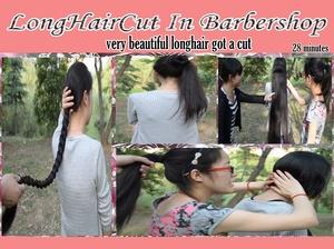 very beautiful longhair got a cut