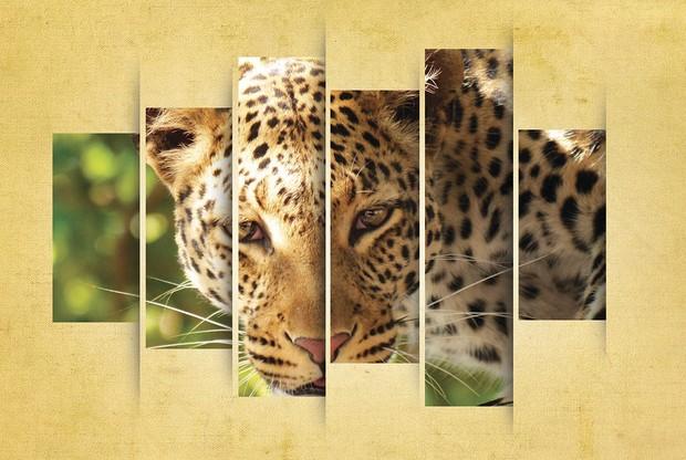 Leopard Display Poster Art