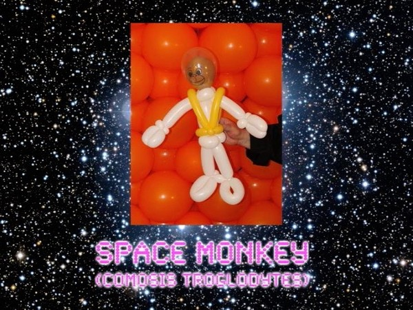 Space Monkey Balloon Animal by Jeff Hayes