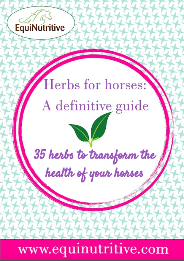 Herbs For Horses: The Definitive Guide