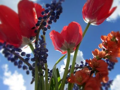 Flowers With Blue Sky