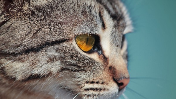 Cat Stock Photos Collection [Free Download]