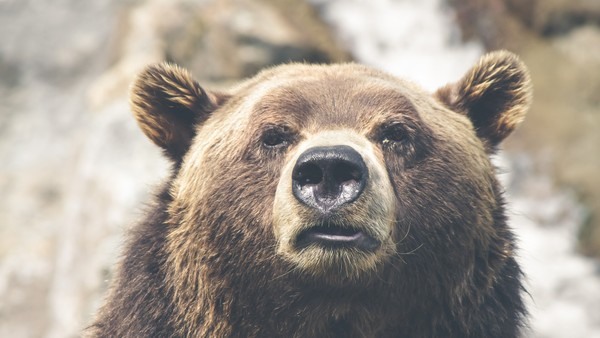 Bear Stock Photos Collection [Free Download]