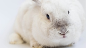 Rabbit Stock Photo Collection [Free Download]