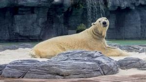 Polar Bear Stock Photos Collection [Free Download]