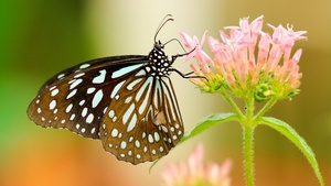 Butterfly Stock Photos Collection [Free Download]