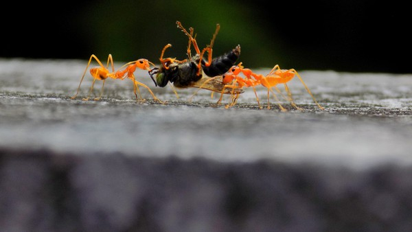 Ant Stock Photo Collection [Free Download]