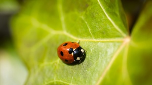Ladybird Stock Photo Collection [Free Download]