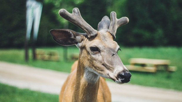 Deer Stock Photos Collection [Free Download]