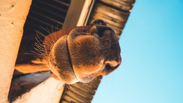 Camel Stock Photos Collection [Free Download]