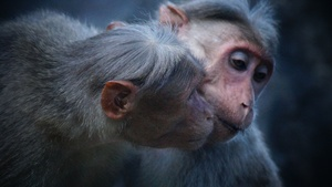 Monkey Stock Photo Collection [Free Download]
