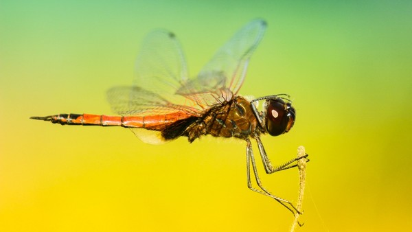 Mosquito Stock Photo Collection [Free Download]
