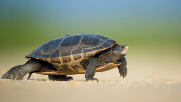 Turtle Stock Photo Collection [Free Download]
