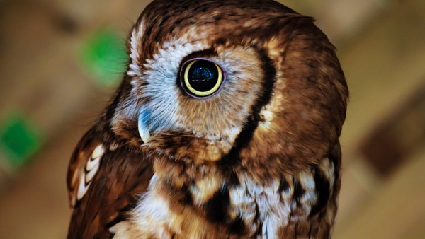 Owl Stock Photo Collection [Free Download]