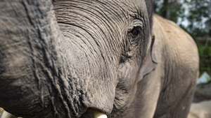 Elephant Stock Photos Collection [Free Download]
