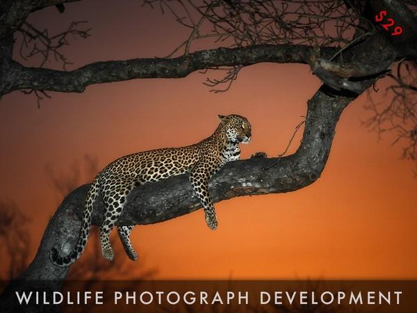 Wildlife Photograph Development Video Tutorial Series