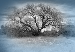 Silver Trees