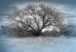 Silver Trees JPG