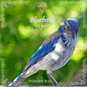 [Fusion Piano] Bluebird / 파랑새