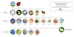 Gettoni della tassonomia