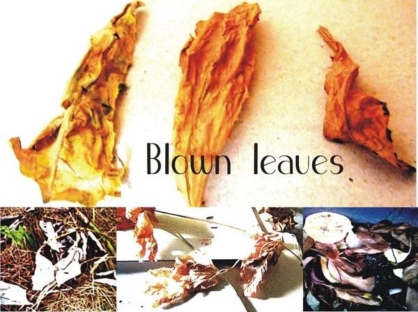 Blown Leaves