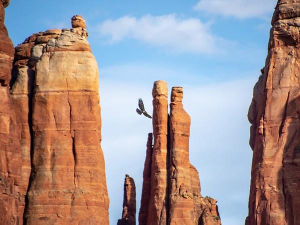 Sedona, Arizona - Red Rocks - Cathedral Rock - Golden Eagle