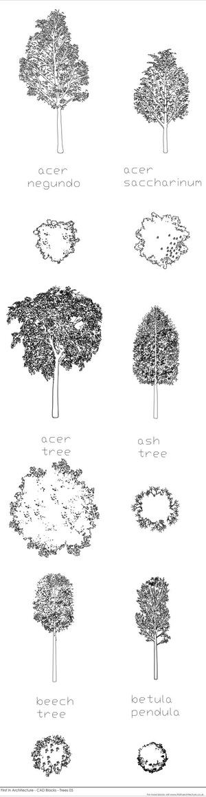 CAD Blocks - Trees 05