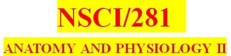 NSCI 281 Week 4 Week Four Quiz