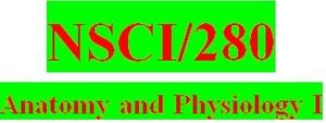 NSCI 280 Week 4 Anatomy & Physiology Revealed Worksheets